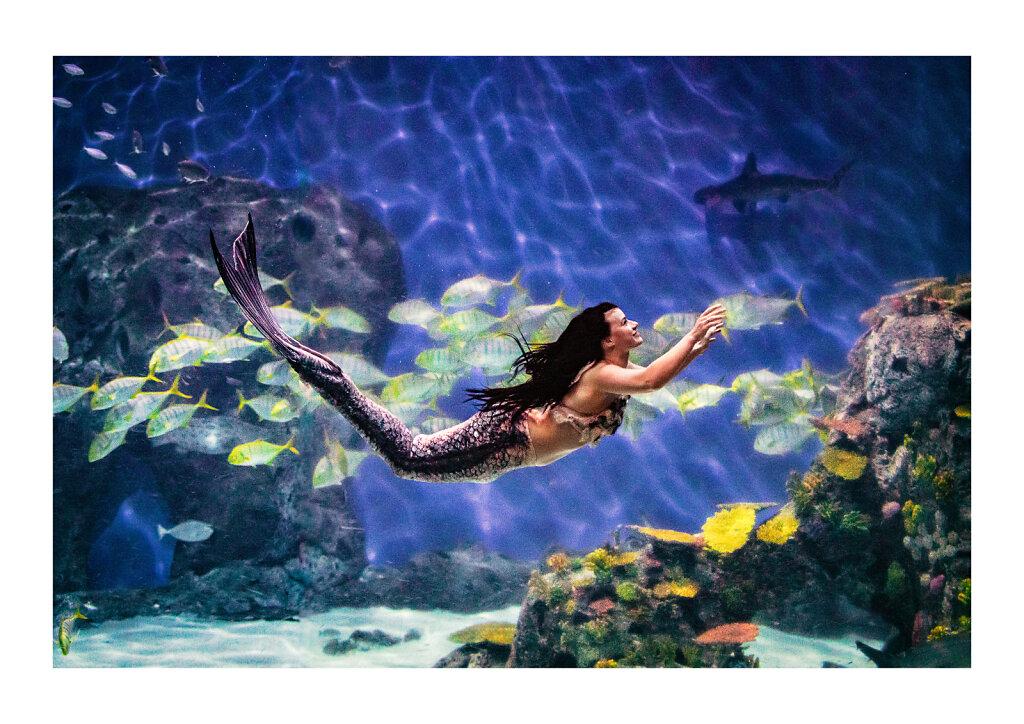 115 The Mermaid